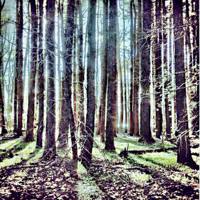 """Sunlit Woods"" stock image"