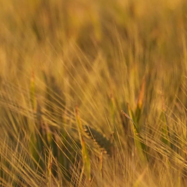 """""""Spring Crop"""" stock image"""