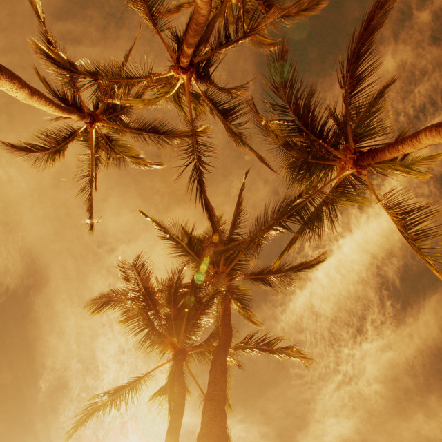 """""""Palm Trees and Golden Hour Glow"""" stock image"""