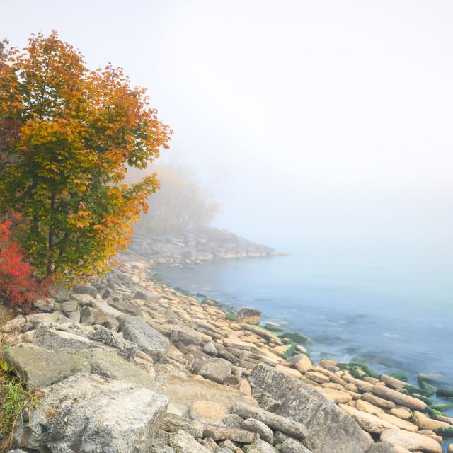"""""""Foggy Autumn Landscape Along Lake Ontario"""" stock image"""