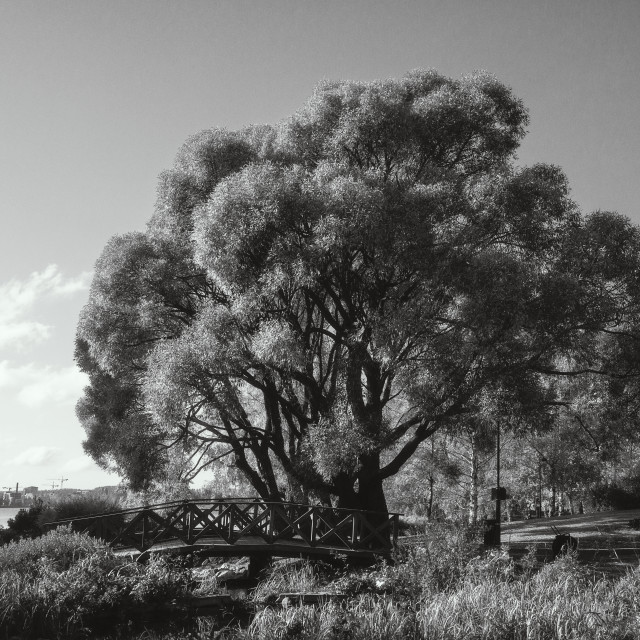 """Scenic Tree Black And White"" stock image"