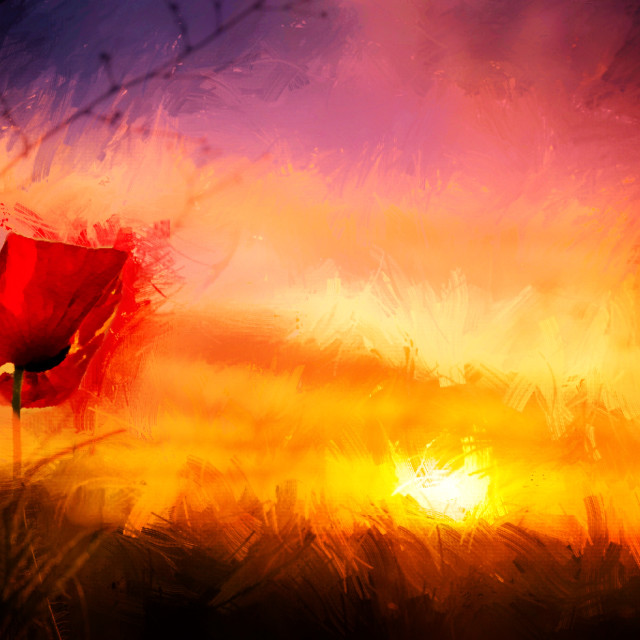 """Fen Ditton Poppy in watercolour, Cambridge UK."" stock image"