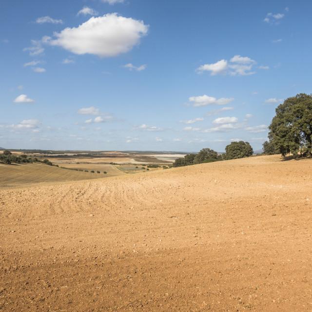 """Spanish Farm field with oak tree."" stock image"