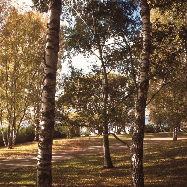"""Tree Trees"" stock image"