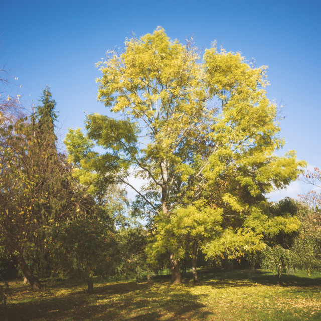 """Bright Tree"" stock image"