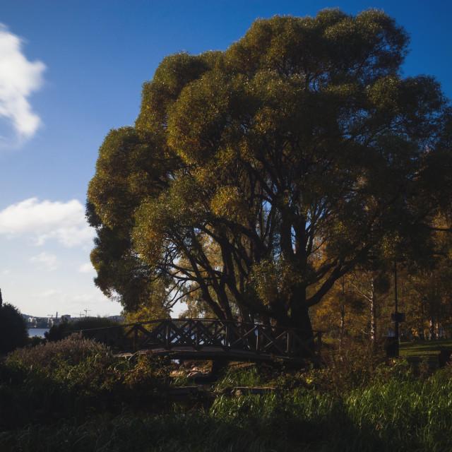 """""""Abundance II (Tree)"""" stock image"""