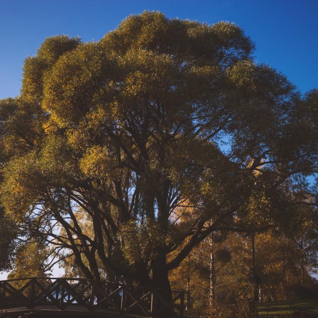 """""""Abundance III (Tree)"""" stock image"""