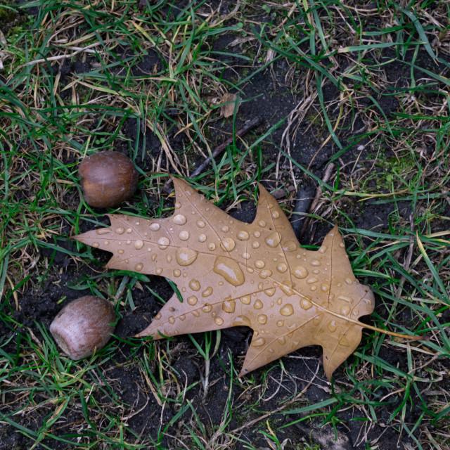 """Autumn´s leaf on the ground"" stock image"