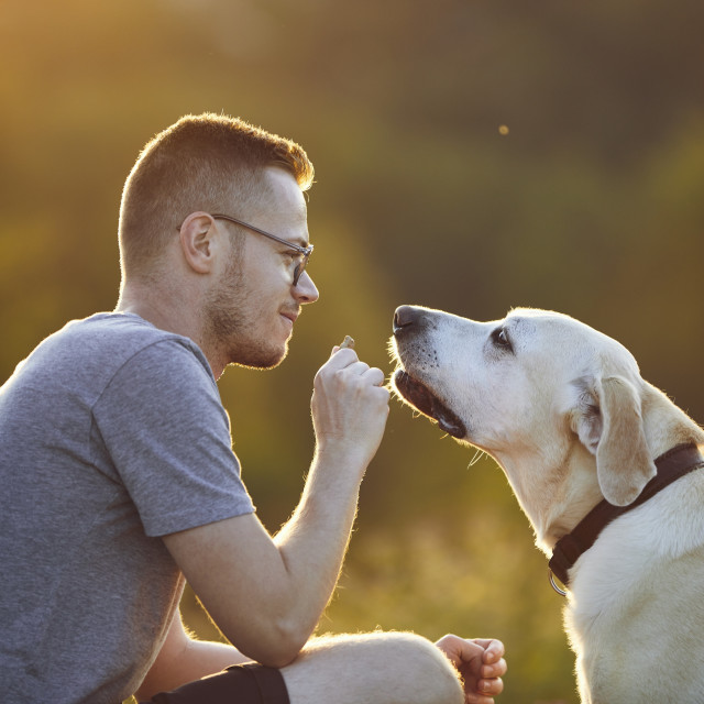 """""""Man playing with his dog on meadow at sunset"""" stock image"""
