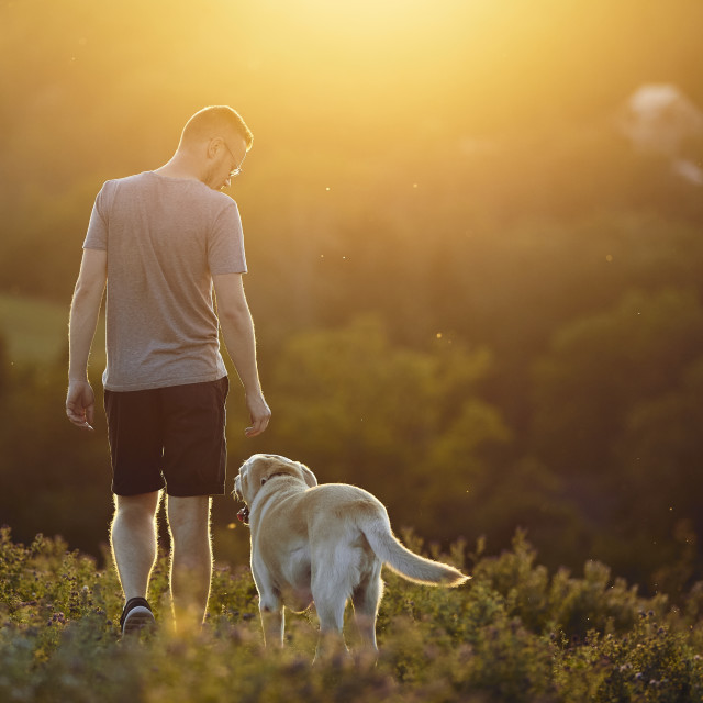 """""""Man with dog walking on meadow at sunset"""" stock image"""