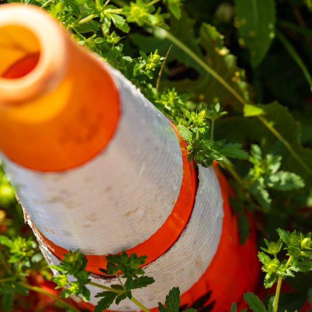 """Traffic Cone Being Overgrown by Plants"" stock image"