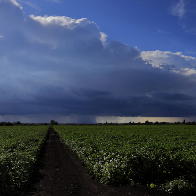"""Cumulonimbus Storm clouds over Fenland fields, near Wisbech town,..."" stock image"