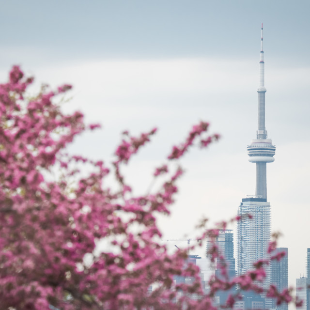 """Springtime In Toronto, Canada"" stock image"