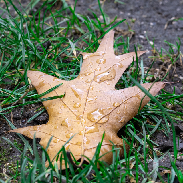 """""""A leaf with raindrops on it"""" stock image"""