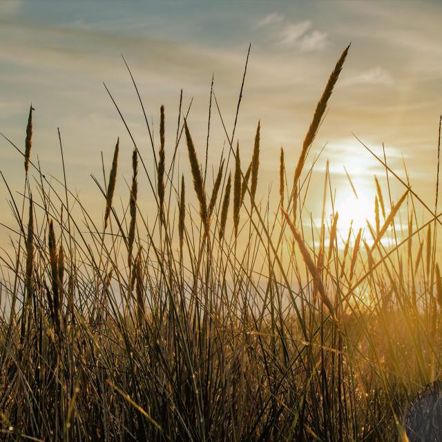 """""""Dunes sunrise"""" stock image"""