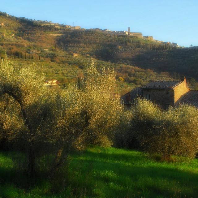 """""""Val di Loreto near Cortona"""" stock image"""