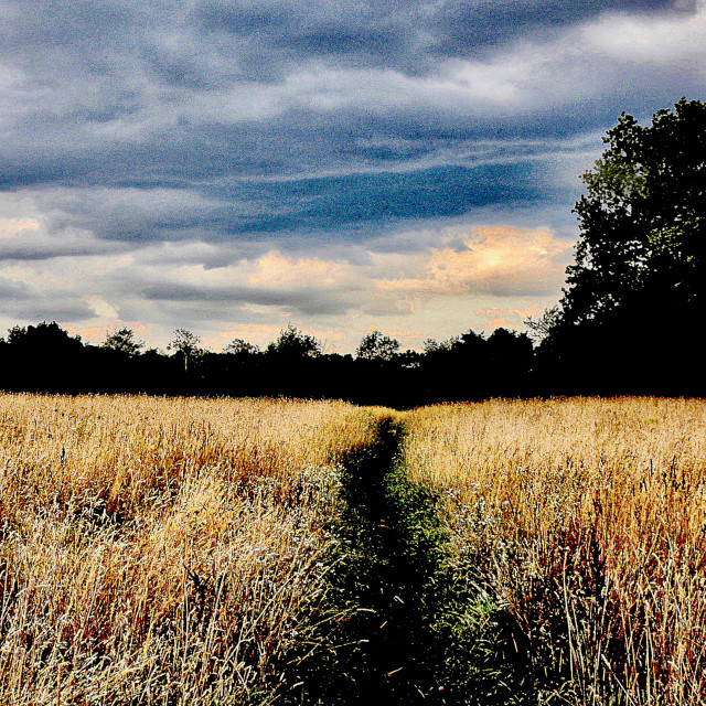 """""""Path Through the Field"""" stock image"""