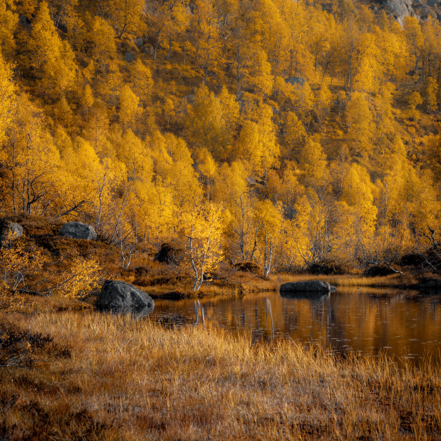 """""""Autumnal Landscapes of Norway"""" stock image"""