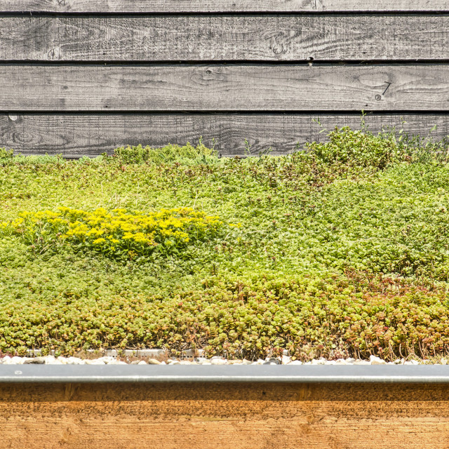 """""""Vegetated roof and wooden facade"""" stock image"""