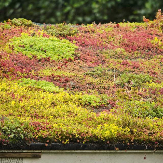 """""""Colorful sedum roof"""" stock image"""