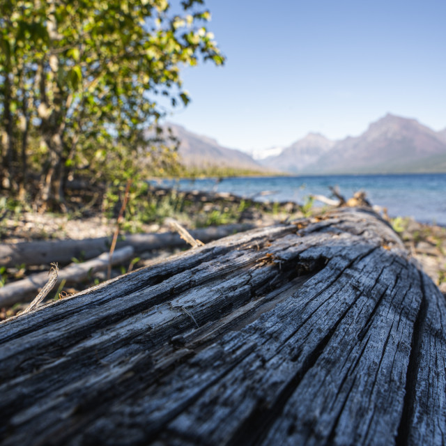 """Fallen Tree Leading into Lake McDonald in Glacier National Park"" stock image"
