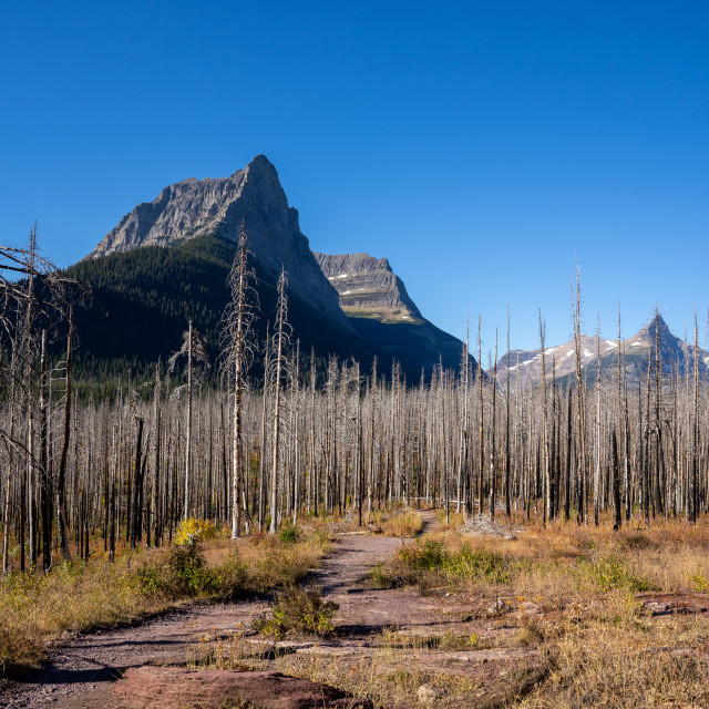 """Citadel Mountain and the Burned Forest from the St Mary Waterfal"" stock image"