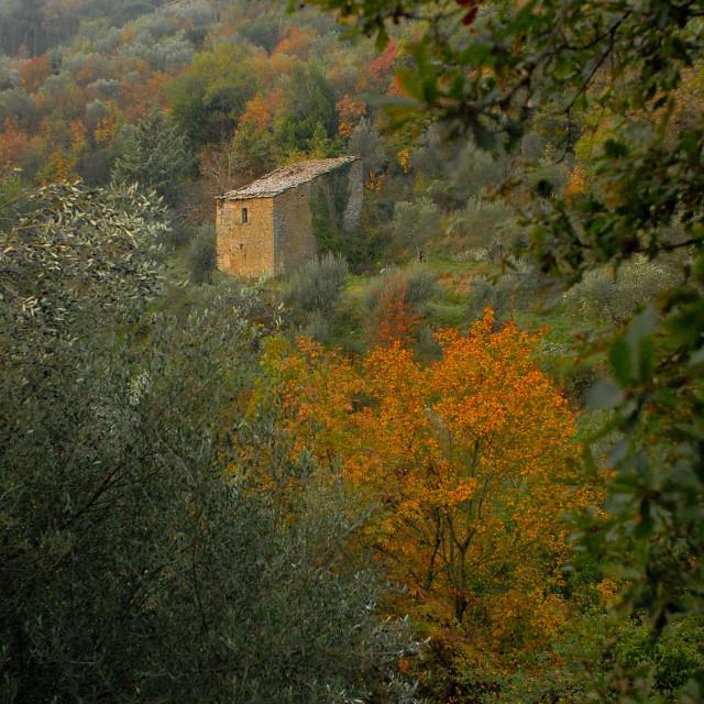 """""""A stone croft near Cortona"""" stock image"""