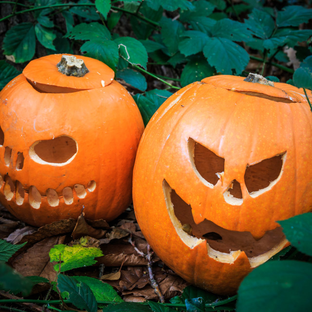 """""""Two pumpkins carved for Halloween"""" stock image"""