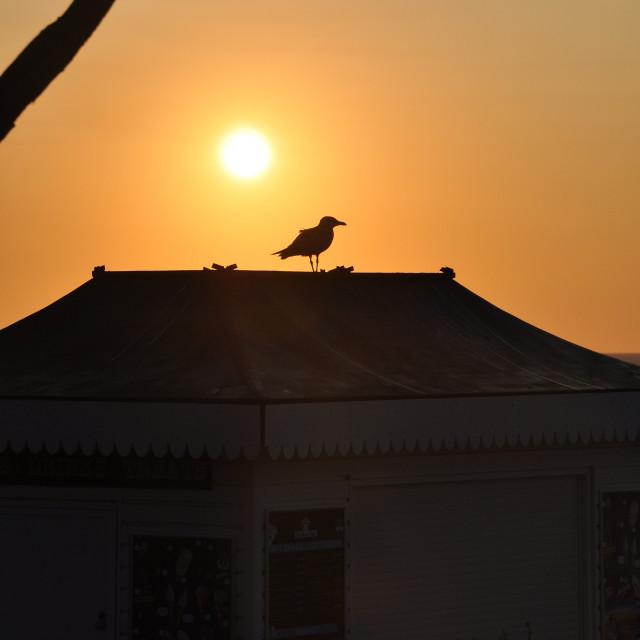 """Seagull sunrise"" stock image"