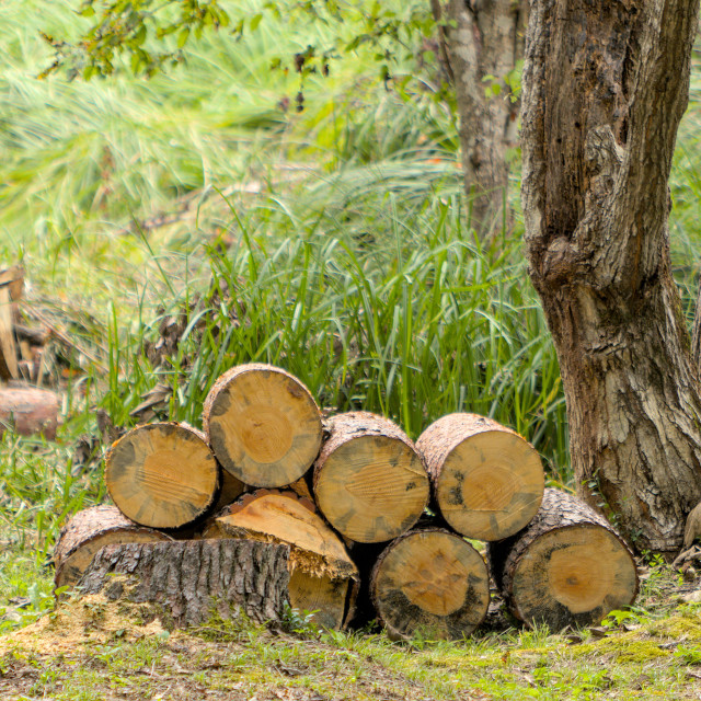 """stack of logs for firewood"" stock image"