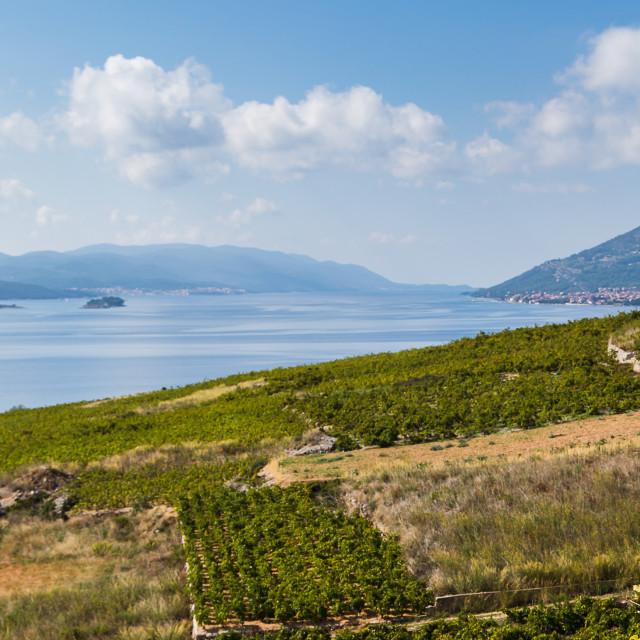 """Vineyards on the Peljesac Peninsula"" stock image"