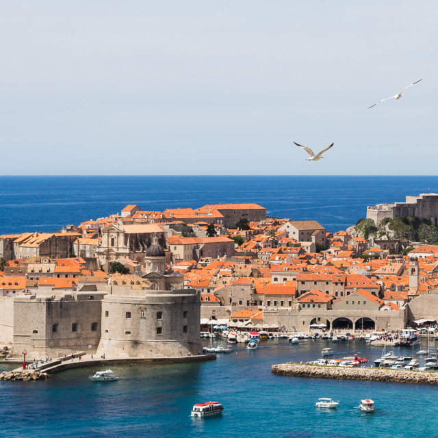 """""""Sea gulls over the old town of Dubrovnik"""" stock image"""