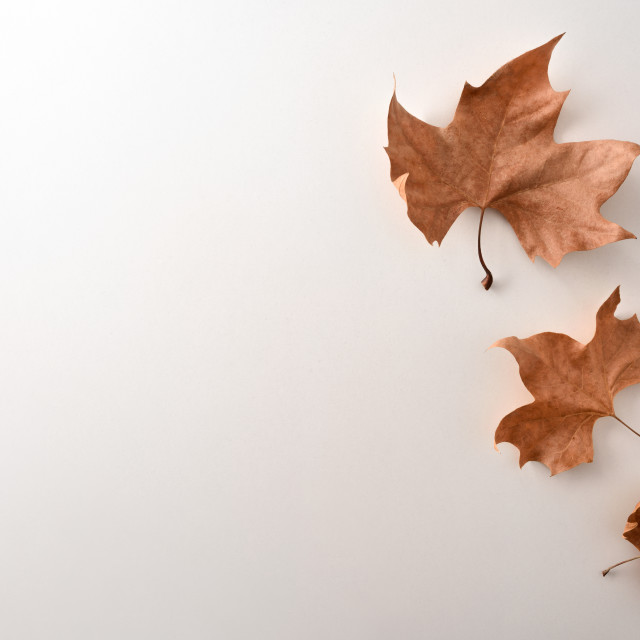 """""""Autumnal background with dry leaves on the right white table"""" stock image"""