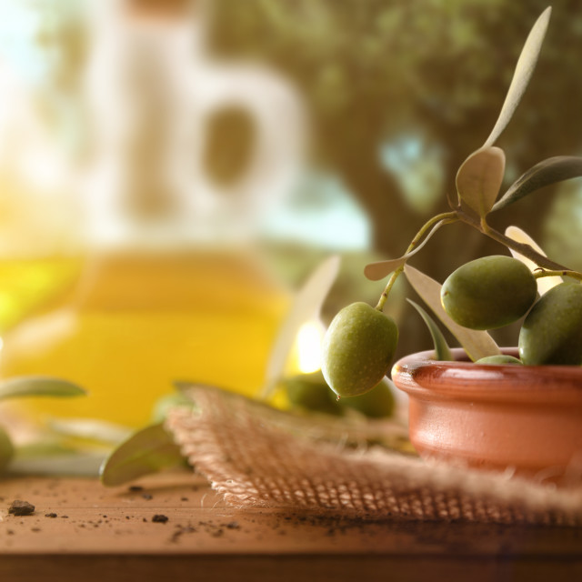 """""""Olives freshly picked in clay container on table in field"""" stock image"""