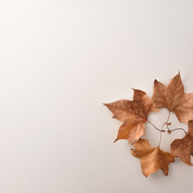 """""""Autumn background with circle with dry leaves in a corner"""" stock image"""