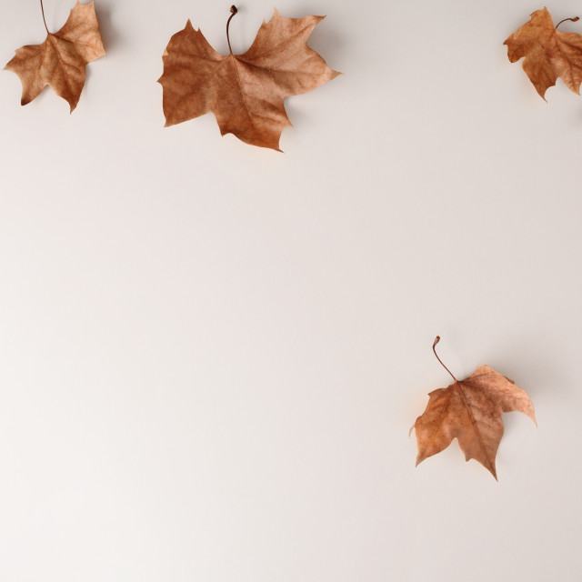 """""""Autumn background concept on white with dried leaf falling"""" stock image"""