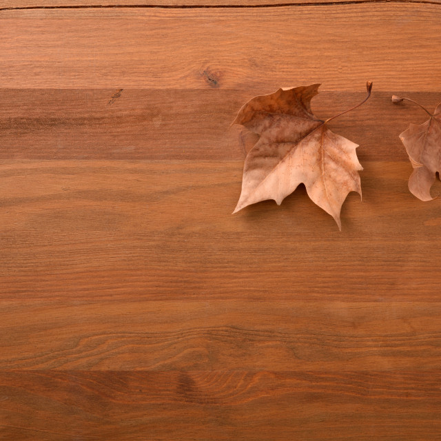 """""""Autumn background with two dry brown leaves on wooden"""" stock image"""