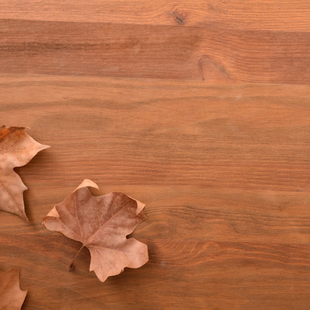 """""""Autumnal background with three dry brown platanus leaves on wooden"""" stock image"""