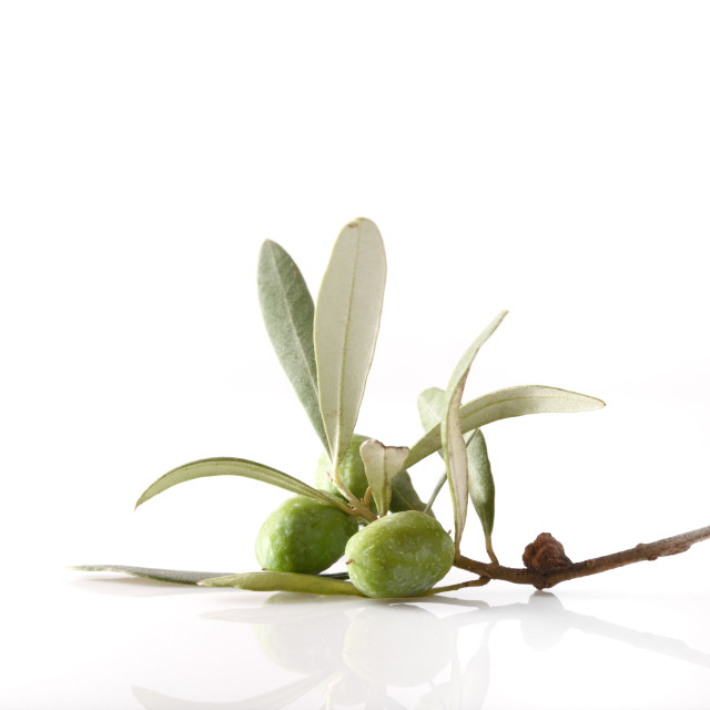 """Olive twig with olives on table and white isolated background"" stock image"