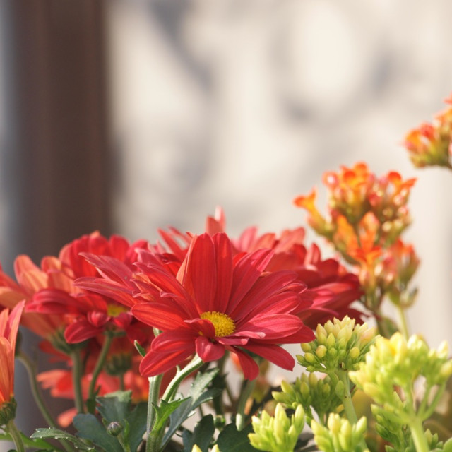 """""""Home garden"""" stock image"""