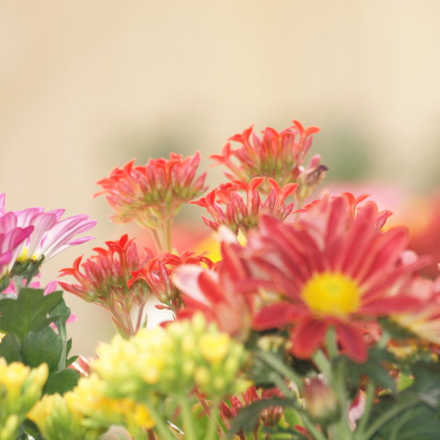 """Flowers Garden"" stock image"