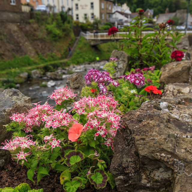 """""""Flowers on the riverside in Lynmouth"""" stock image"""
