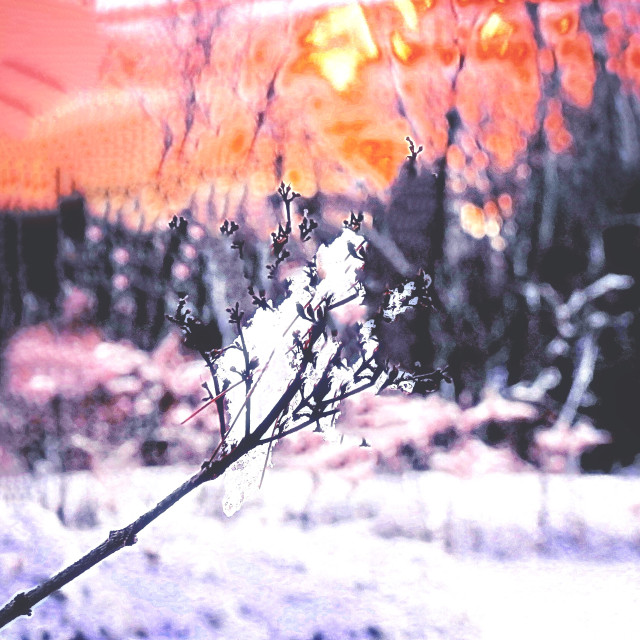 """Winter's Promise"" stock image"