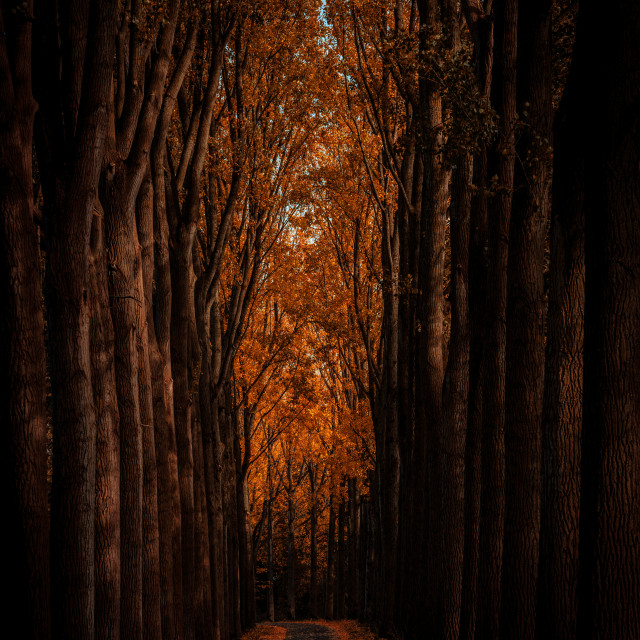 """Orange woodland path"" stock image"