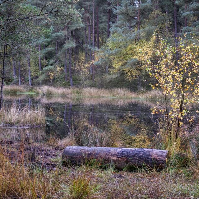 """Bordie Loch in Devilla Forest"" stock image"