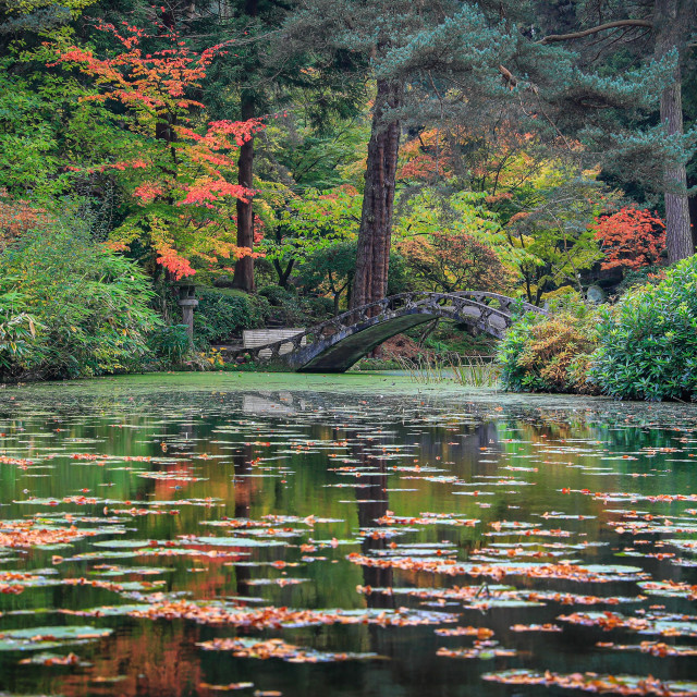 """autumn colours in water"" stock image"