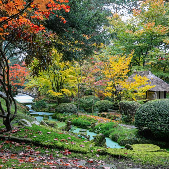 """Japanese garden in autumn"" stock image"