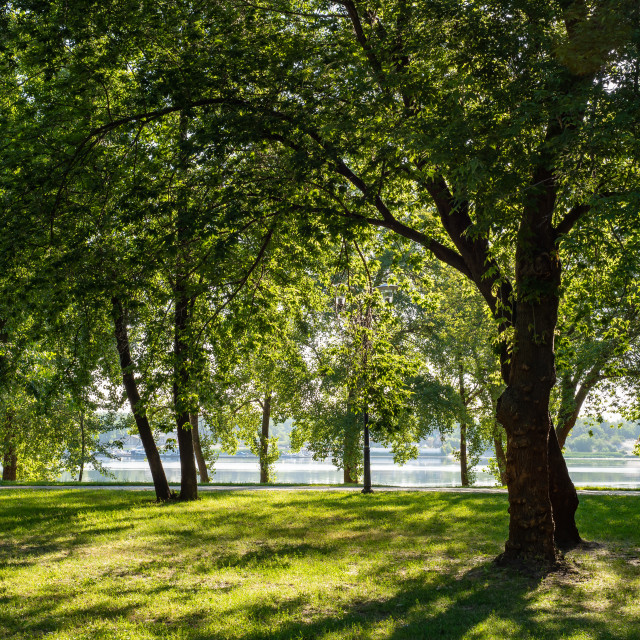 """Tree against the light near the river during a sunny summer morn"" stock image"
