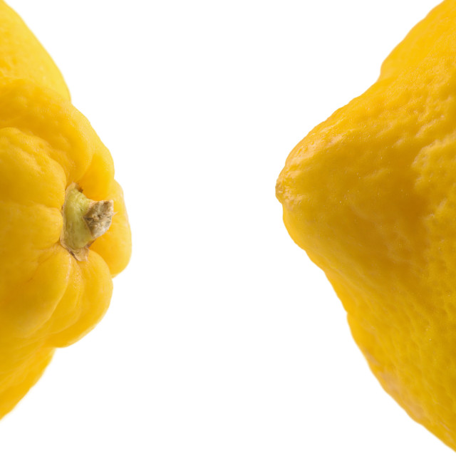 """Detail of both ends of the lemon"" stock image"