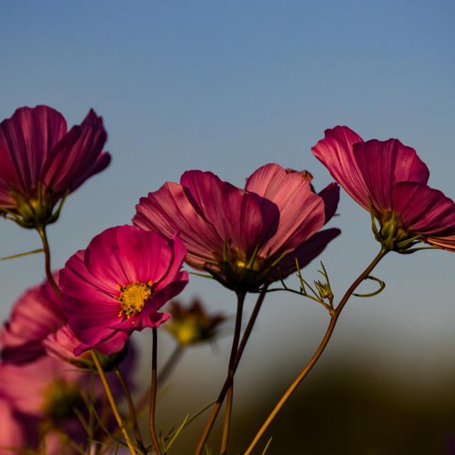 """Flowers"" stock image"
